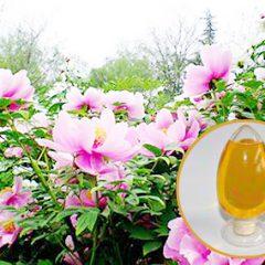 牡丹油(ピオニーシードオイル)